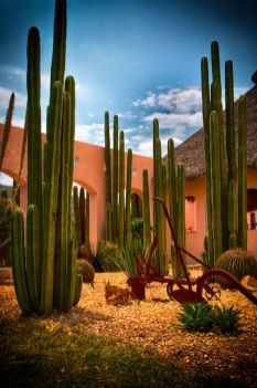 Stunning desert garden ideas for home yard 58