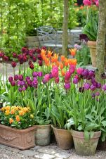 Beauty Tulips Arrangement for Home Garden 11