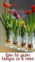 Beauty Tulips Arrangement for Home Garden 18
