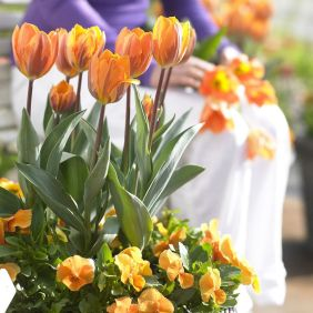Beauty Tulips Arrangement for Home Garden 6