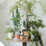 Cool Plant Stand Design Ideas for Indoor Houseplant 12