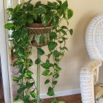 Cool Plant Stand Design Ideas for Indoor Houseplant 74
