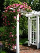 Stunning Creative DIY Garden Archway Design Ideas 54