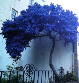 Beautiful Flowering Tree for Yard Landscaping 24