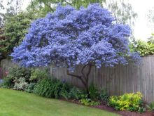 Beautiful Flowering Tree for Yard Landscaping 7