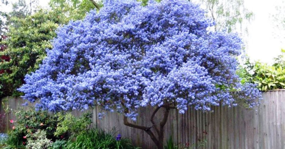 40 Beautiful Flowering Trees Ideas for Yard Landscaping ... on Backyard Landscaping Ideas With Trees id=94696