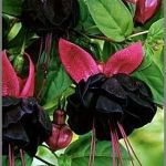 Spooky Plant and Flower Ideas to Make Perfect Goth Garden 21