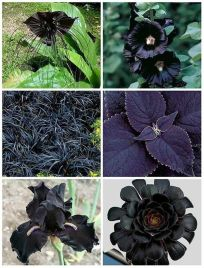 Spooky Plant and Flower Ideas to Make Perfect Goth Garden 9