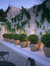 Impressive Climber and Creeper Wall Plants Ideas 18