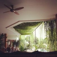 Impressive Climber and Creeper Wall Plants Ideas 22
