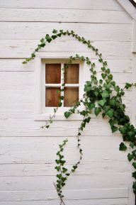 Impressive Climber and Creeper Wall Plants Ideas 27