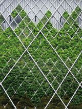 Impressive Climber and Creeper Wall Plants Ideas 41