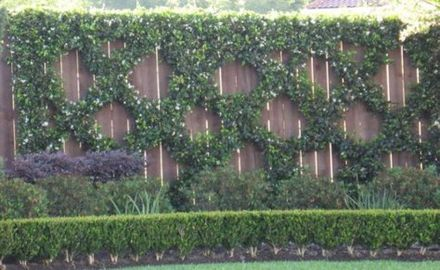 Impressive Climber and Creeper Wall Plants Ideas 43