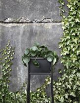 Impressive Climber and Creeper Wall Plants Ideas 46