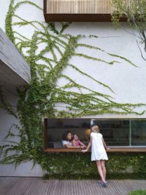 Impressive Climber and Creeper Wall Plants Ideas 48