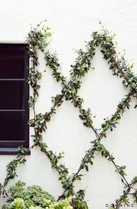Impressive Climber and Creeper Wall Plants Ideas 55