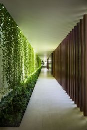 Impressive Climber and Creeper Wall Plants Ideas 64