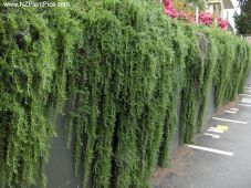 Impressive Climber and Creeper Wall Plants Ideas 66