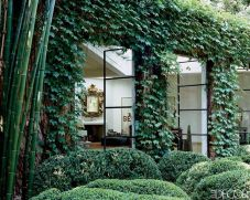 Impressive Climber and Creeper Wall Plants Ideas 67