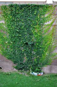 Impressive Climber and Creeper Wall Plants Ideas 78