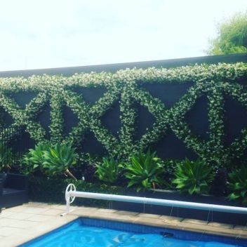 Impressive Climber and Creeper Wall Plants Ideas 81