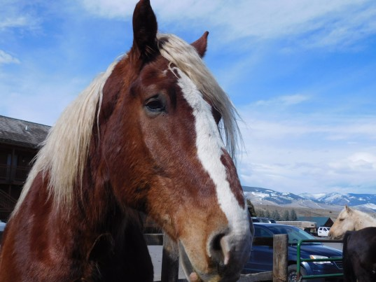 Draft Horse by Fencing