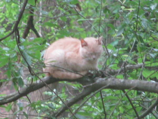 Just a little cat nap before I get tired of being a bird.