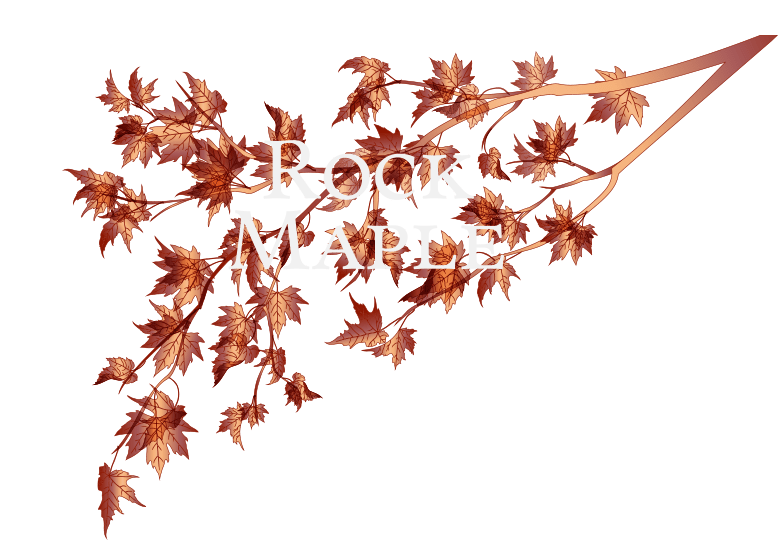 Rock Maple Logo