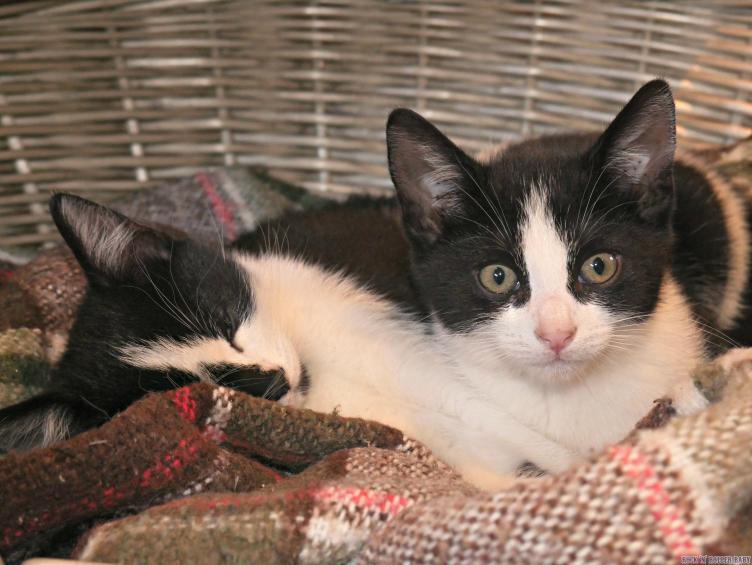 Kittens Post