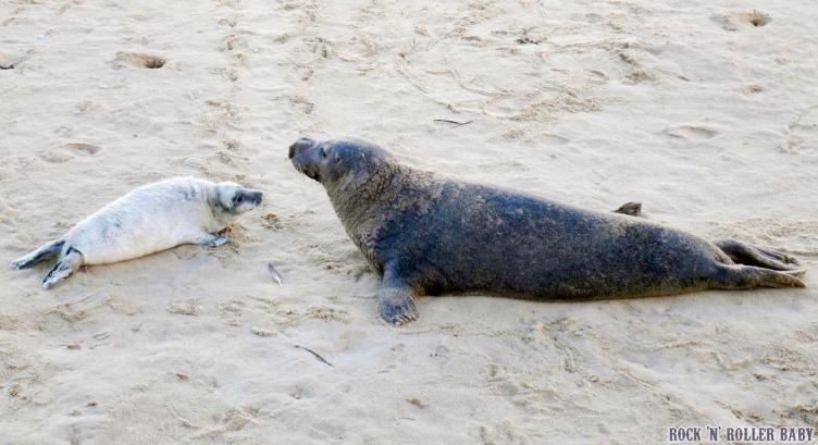 The seals at Horsey!