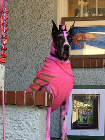 All dressed up and ready for the XXX Parade, the first of the Mardi Gras season