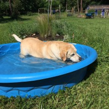 Henry cooling off in the hot weather