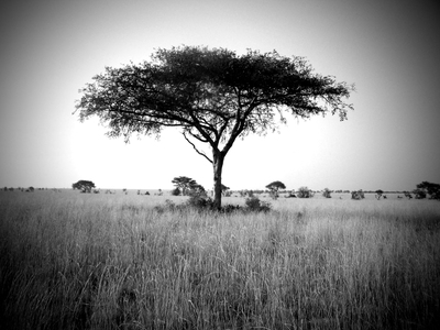 Treebw_2