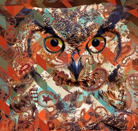 8 23 18 Stray Owls