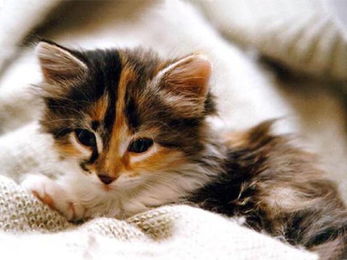 Je n'ai pas eu les temps de faire des photos alors je te met une photo de chat mignon.