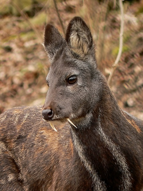 Le Meilleur An Inspiring Lesson From A Musk Deer How To Discover Our Ce Mois Ci