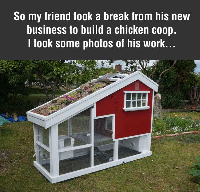 Le Meilleur 1000 Ideas About Mobile Chicken Coop On Pinterest Ce Mois Ci