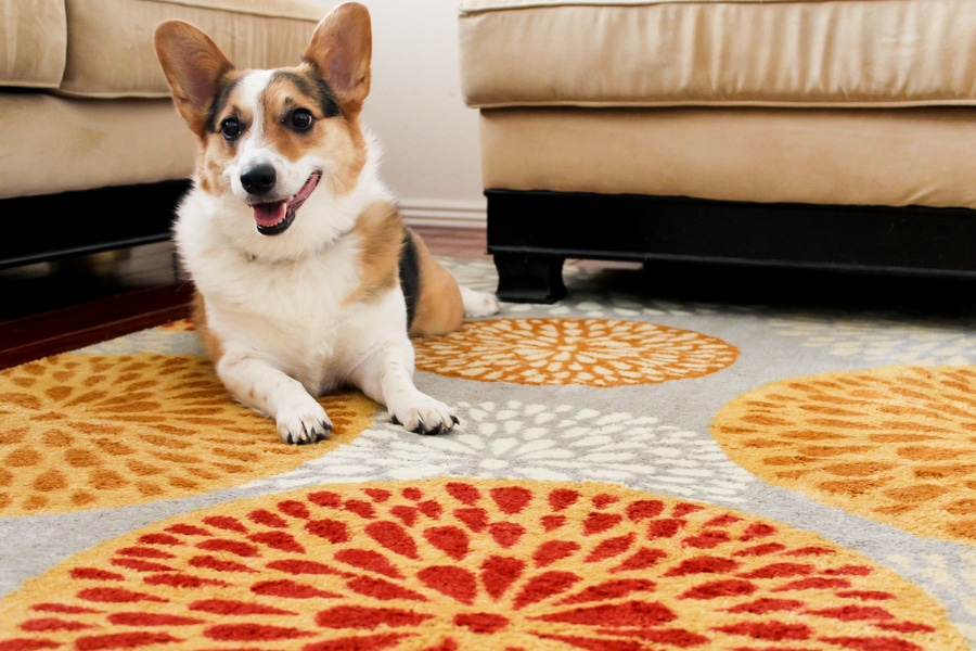 Living room makeover: Area rug from Mohawk Homes