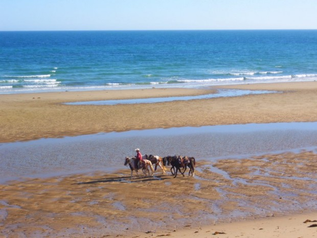 100_2528-1-620x465 Horseback riding on the beach