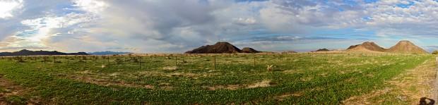 desierto-verde2-620x149 Green desert