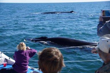 DSC04567 World class whale watching in Puerto Peñasco