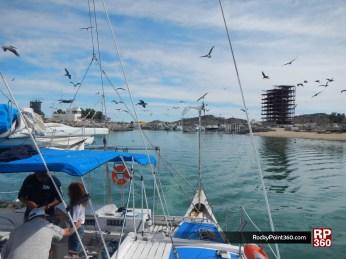 whale-trip-feb2014-1 World class whale watching in Puerto Peñasco