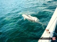 whale-trip-feb2014 (3)