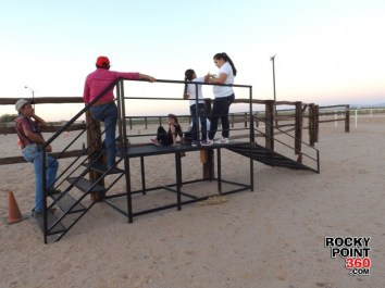 equine therapy (5)