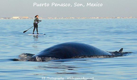 SUP Whale