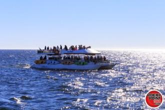 ecofun-whalewatching-001-1200x800 HOLY Week! Rocky Point Weekend Rundown!