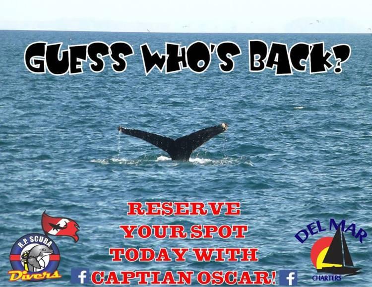del-mar-whale Bowl-ing  Rocky Point Weekend Rundown!