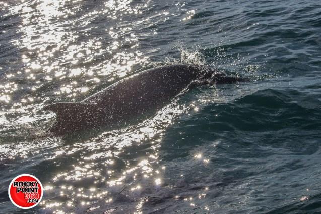 whales-feb21-2017-delmar (1)