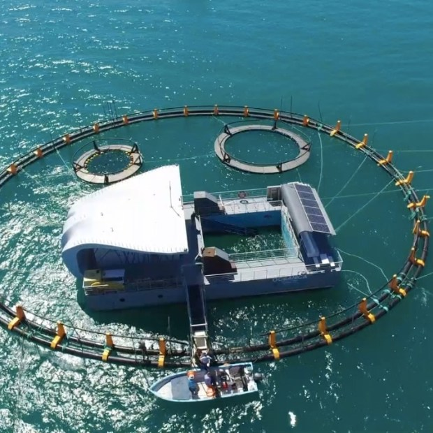 Santuario-vaquita Historic rescue of young vaquita in efforts to preserve endangered species