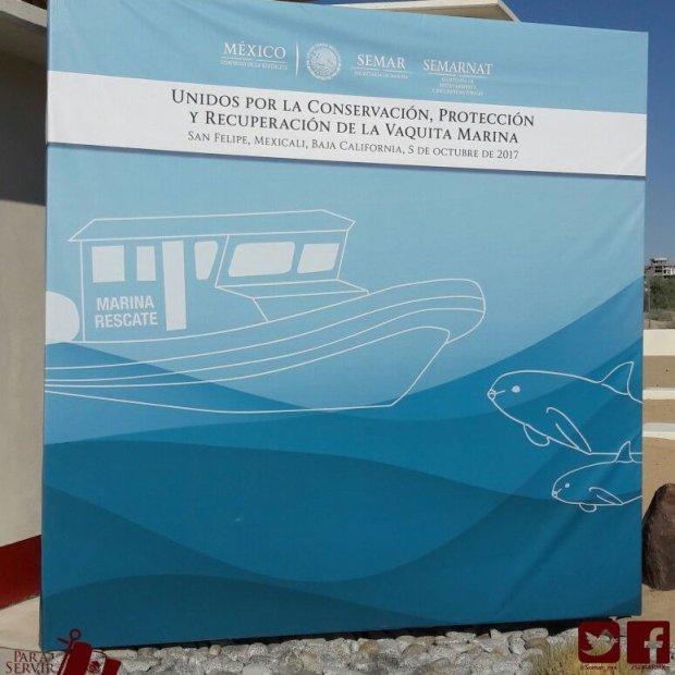 Semarnat-vaquita-rescate-4 Dolphin Vaquita Rescue Plan Goes into Action